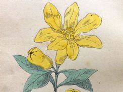 16th October 2018. Morris Bible Botanical Prints